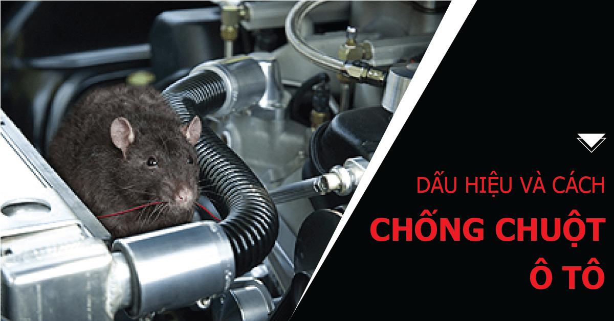 Những cách chống chuột chui vào xe ô tô hiệu quả nhất